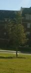 baylors little tree