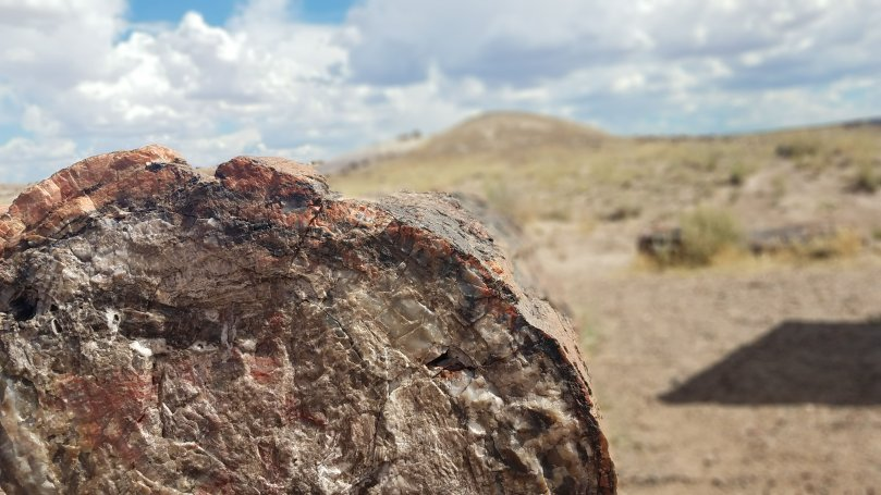 1 petrified forest